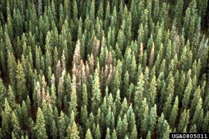 0805011-Edward H Holsten_USDA Forest Service_Bugwood org2