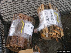 5252044-Joseph OBrien_USDA Forest Service_Bugwood org