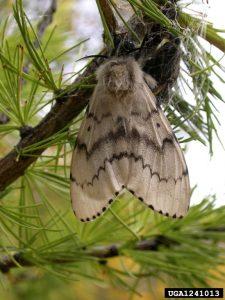 1241013-John H Ghent_USDA Forest Service_Bugwood ord