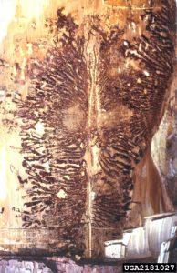 2181027-Darren Blackford_USDA Forest Service_Bugwood org