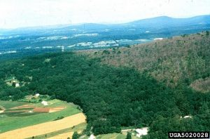 Landscape-scale gypsy moth defoliation in PA