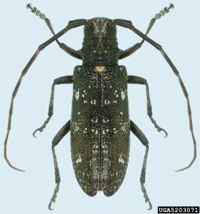 5203071-Natasha Wright_Cooks Pest Control_Bugwood org